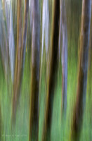 Abstract Alder III