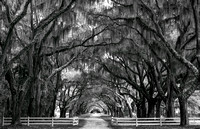 The Plantation Black and White