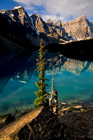 Survivor, Moraine Lake, Banff National Park