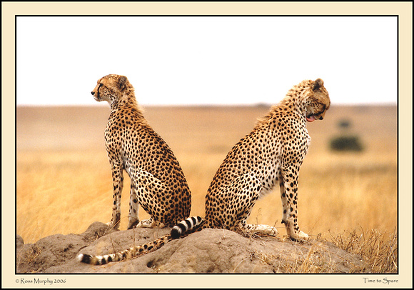 Brothers Of The Serengeti 5