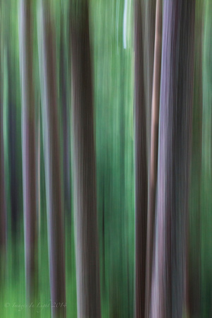 Abstract Fir II