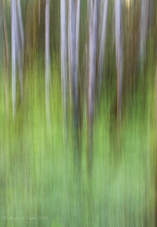 Abstract Alder II