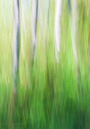 Abstract Alder