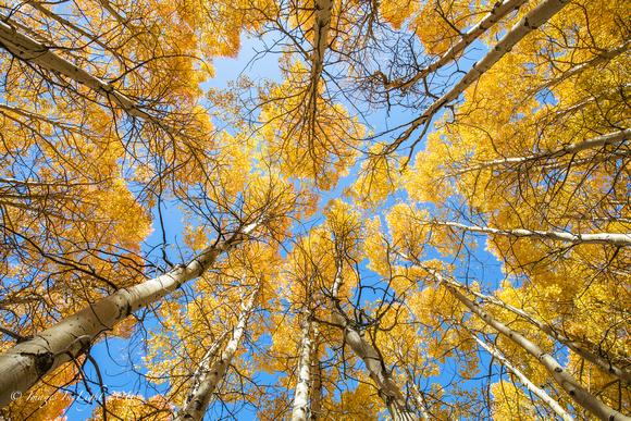 Images In Light: Latest Work &emdash; Sierra Aspen